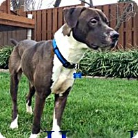 Adopt A Pet :: Hansel - Roanoke, VA