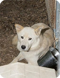 Husky Mix Dog for adoption in Poland, Indiana - Ricky