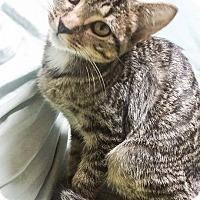 Adopt A Pet :: Yorrick - St. Louis, MO