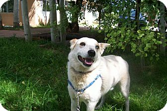Cattle Dog/Australian Shepherd Mix Dog for adoption in Questa, New Mexico - Barry