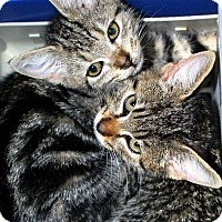 Adopt A Pet :: Fran and Frank - Bethpage, NY