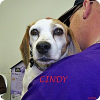 Adopt A Pet :: CINDY - Ventnor City, NJ