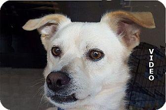 Terrier (Unknown Type, Medium)/Golden Retriever Mix Dog for adoption in Durham, North Carolina - Vail