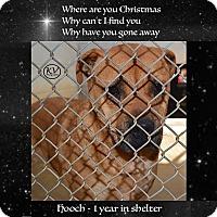 Adopt A Pet :: Hooch - Sautee, GA