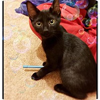 Adopt A Pet :: Marie - Philadelphia, PA