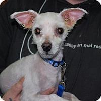 Adopt A Pet :: Dave - Brooklyn, NY