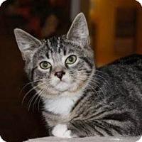 Adopt A Pet :: Barnaby - Walworth, NY