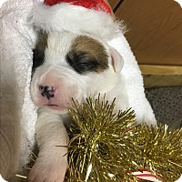 Adopt A Pet :: Patch - Homer, NY
