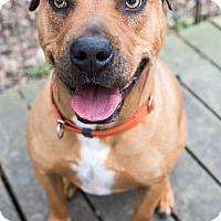 Adopt A Pet :: Briles - Vancouver, BC