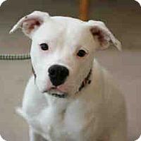 Adopt A Pet :: Xanny - Only $105 adoption! - Litchfield Park, AZ