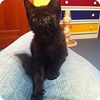 Adopt A Pet :: Sophie (LE) - Little Falls, NJ