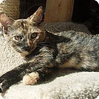 Adopt A Pet :: Gabby - Germansville, PA