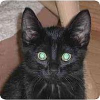 Adopt A Pet :: Fozzie Bear - Lombard, IL