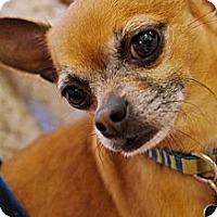 Adopt A Pet :: QUINT - AUSTIN, TX