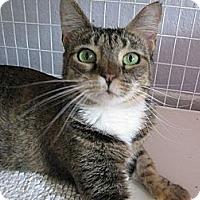 Adopt A Pet :: AUDREY - Brea, CA