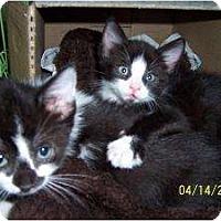 Adopt A Pet :: Pia & Chase - Island Park, NY