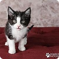 Adopt A Pet :: Elinor - Eagan, MN