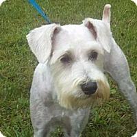 Adopt A Pet :: Jagger - Brattleboro, VT
