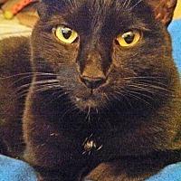 Adopt A Pet :: Sara (in foster) - Alexandria, VA