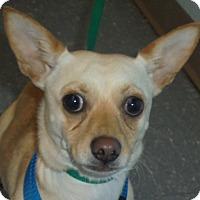Adopt A Pet :: Thor - Orlando, FL