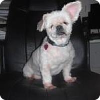 Adopt A Pet :: Blanche (FL) - Brunswick, GA