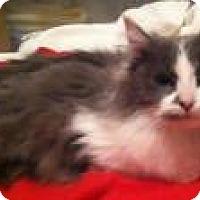 Adopt A Pet :: Honey - Medford, NJ