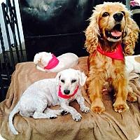 Adopt A Pet :: Paisley Rain - Orange, CA