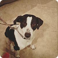 Adopt A Pet :: Dan - Acushnet, MA