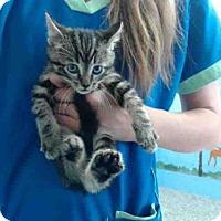 Adopt A Pet :: A493705 - San Bernardino, CA