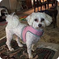 Adopt A Pet :: Lilly - Beavercreek, OH