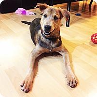 Adopt A Pet :: Finn - Eden Prairie, MN
