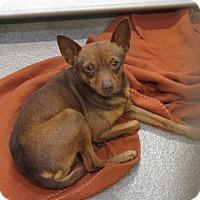 Adopt A Pet :: Truffel - Tracy, CA