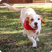 Adopt A Pet :: Jesse - Jesup, GA