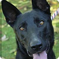 Adopt A Pet :: PRADA-Low Fees/spayed - Red Bluff, CA
