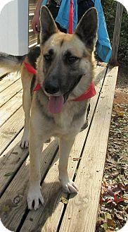 German Shepherd Dog Dog for adoption in Bay Springs, Mississippi - S1047    Duke