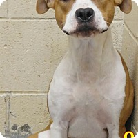 Adopt A Pet :: 1-7 - Triadelphia, WV