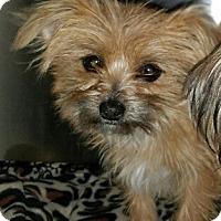 Adopt A Pet :: Layla - Monrovia, CA