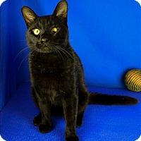 Adopt A Pet :: Wrigley - Sherwood, OR