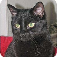 Adopt A Pet :: Jaguar - Woodstock, IL