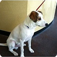 Adopt A Pet :: Michelle's Jack in Houston - Houston, TX