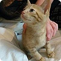 Adopt A Pet :: Wiggles - Ft. Lauderdale, FL
