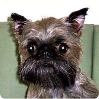 Adopt A Pet :: PAIGE - ADOPTION PENDING - Little Rock, AR