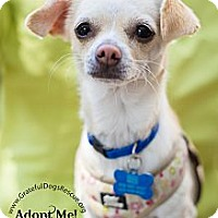 Adopt A Pet :: Peaches - San Francisco, CA