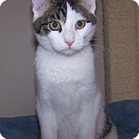 Adopt A Pet :: K-Kostendt2-Carson - Colorado Springs, CO