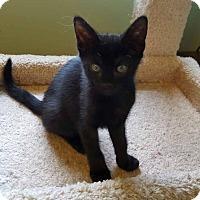 Adopt A Pet :: Nick  Such a nut! - Berkeley Hts, NJ