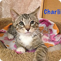 Adopt A Pet :: Charlie - Foothill Ranch, CA
