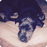 Adopt A Pet :: Blackbeard Adoption pending - Manchester, CT