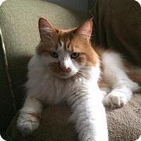 Adopt A Pet :: Nala - Harrisonburg, VA