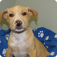 Adopt A Pet :: Ty - Groton, MA