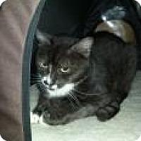 Adopt A Pet :: Flan - Bradenton, FL